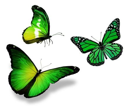 흰색 배경에 고립 된 세 개의 녹색 나비, 스톡 콘텐츠