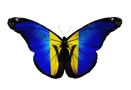 Barbados flag butterfly flying, isolated on white background Stock Photo - 17917800
