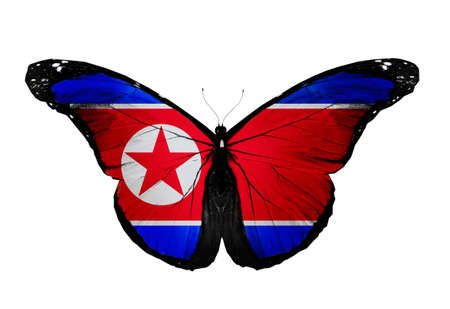North Korea flag butterfly, isolated on white background photo