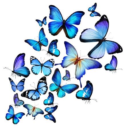白い背景上に分離されて、多くの異なる蝶