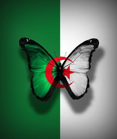 alger: Algerino bandiera farfalla, isolato su sfondo bandiera