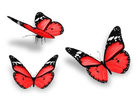 白で隔離され、3 つの赤い蝶