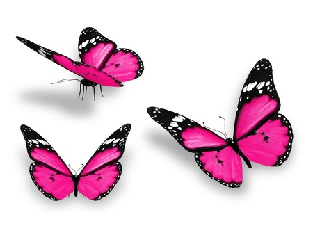 Three pink butterflies, isolated on white