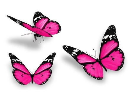 papillon rose: Trois papillons roses, isol� sur blanc Banque d'images