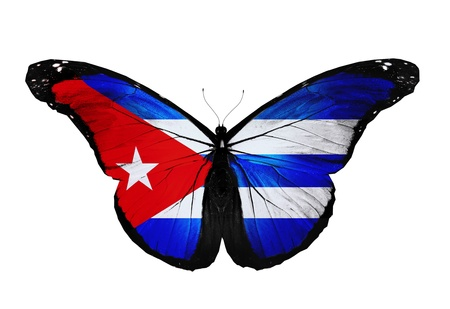 Cuban flag butterfly flying, isolated on white background photo