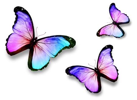 papillon rose: Trois papillons lumière romantique