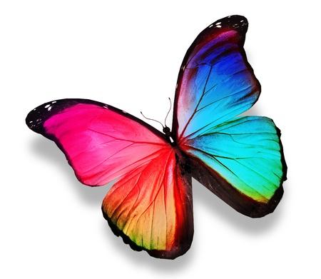 모토 색 나비, 흰색에 고립