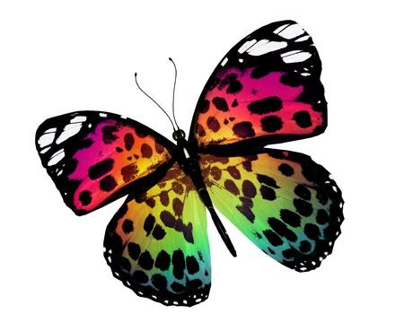 mariposas volando: Mariposa naranja, aislado en fondo blanco