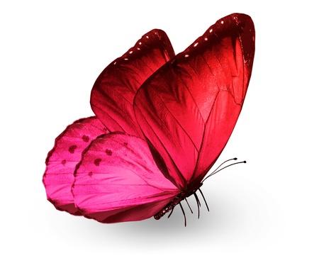 papillon rose: Red papillon rose, isol� sur blanc