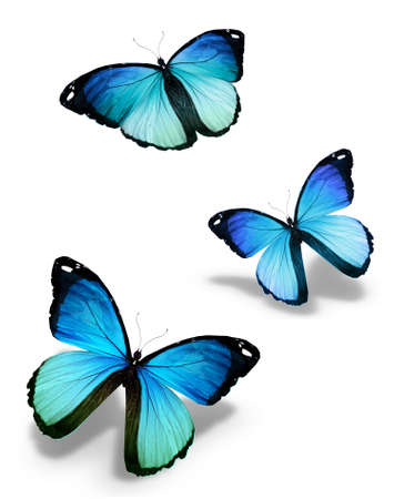 mariposas volando: Tres mariposas azules, aislados en blanco