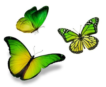 흰 배경에 고립 된 세 개의 녹색, 노랑 나비,