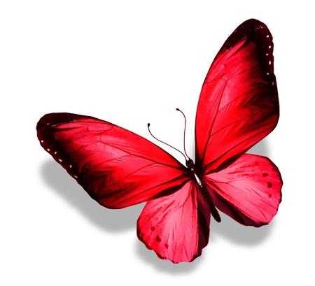赤い蝶、白で隔離されます。