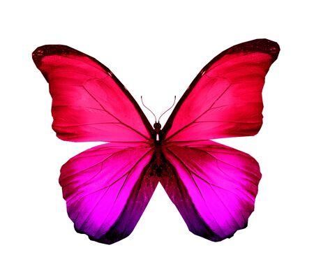 papillon rose: Rose violette papillon, isolé sur blanc Banque d'images