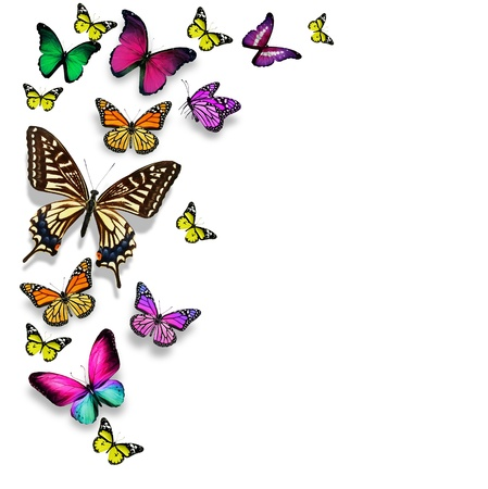 pink butterfly: Many different butterflies, isolated on white background Stock Photo