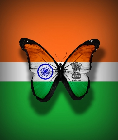 Indian flag butterfly, isolated on flag background photo