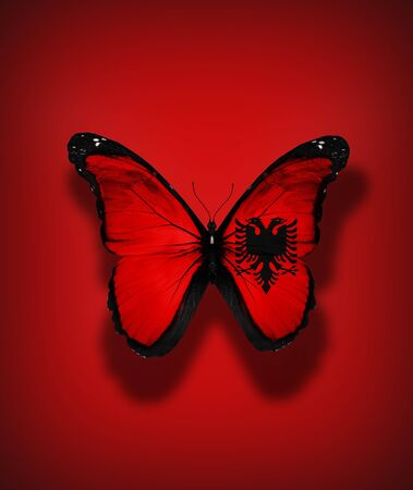 Albanian flag butterfly, isolated on flag background photo