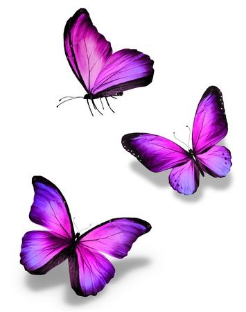 mariposas volando: Tres mariposas violetas, aislados en blanco