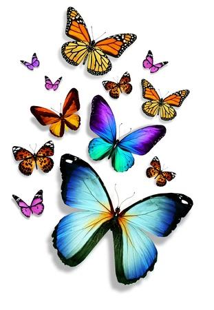 격리 된 흰색 배경에 많은 다른 나비,