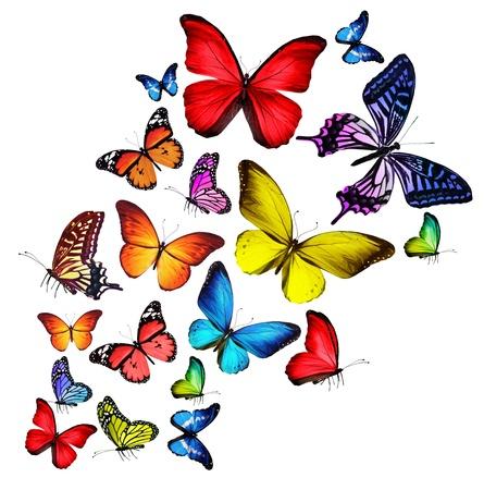 mariposas volando: Muchas mariposas diferentes, aislados en fondo blanco
