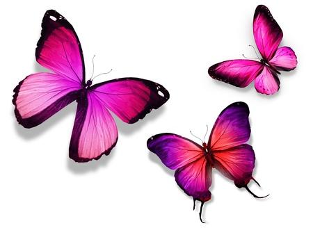 papillon rose: Trois papillon de couleur, isolé sur fond blanc