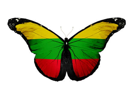 Lithuanian flag butterfly, isolated on white background photo