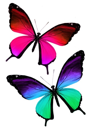 Two color butterflies on white photo