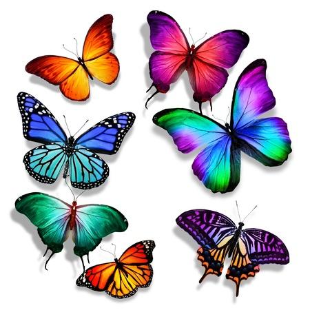 多くの異なる蝶が飛んで、分離に白い背景