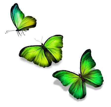 butterflies flying: Tre verdi farfalle gialle, isolato su bianco