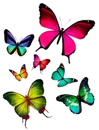 mariposa verde: Muchas diversas mariposas volando, aislado en fondo blanco