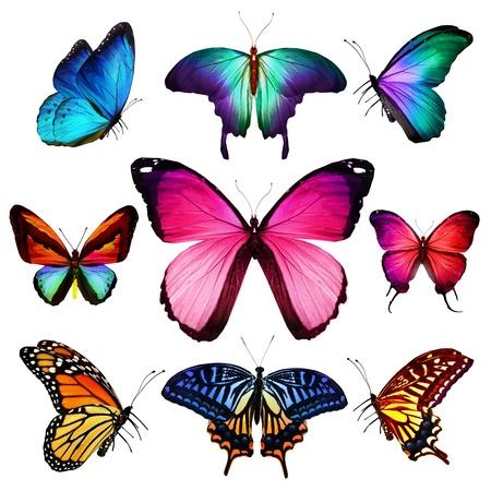 papillon rose: De nombreux papillons qui volent, isol� sur fond blanc