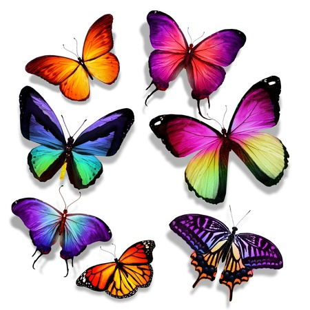 Many different butterflies flying, isolated on white background photo