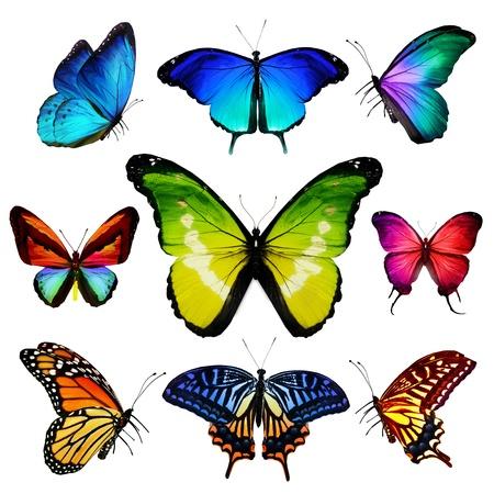흰색 배경에 격리 된 비행 많은 다른 나비, 스톡 콘텐츠