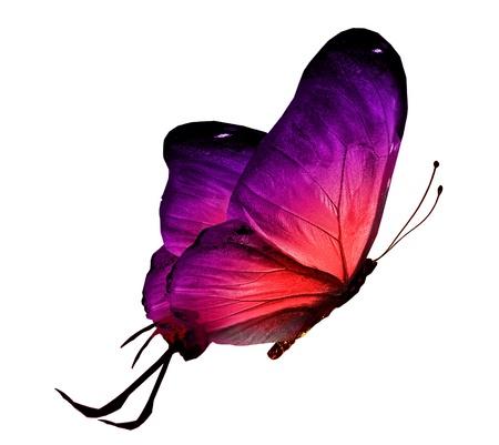 mariposas volando: Color de la mariposa, aislado en blanco Foto de archivo