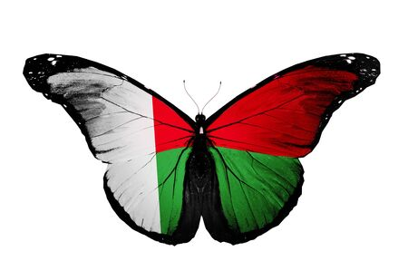 Madagascar flag butterfly, isolated on white background Фото со стока