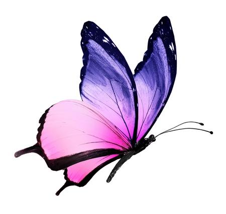 Kleur vlinder vliegen, op een witte Stockfoto