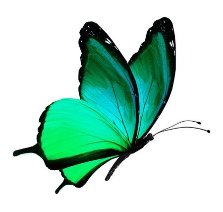 나비 비행, 화이트 절연