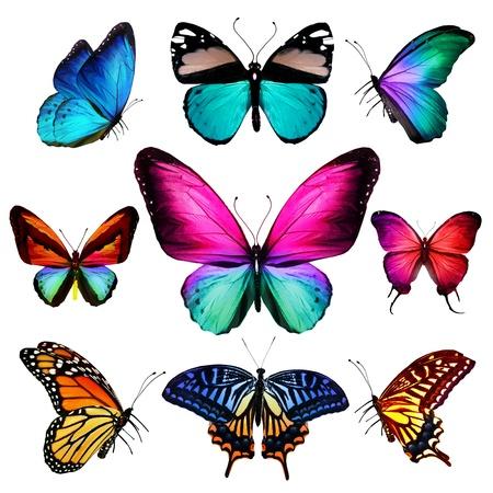 Veel verschillende vlinders vliegen, geïsoleerd op witte achtergrond