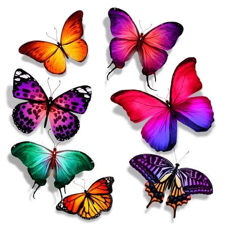 多くの異なる蝶が飛んで、分離で白い背景