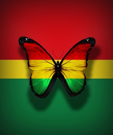 bolivian: Bolivian flag butterfly, isolated on flag background Stock Photo