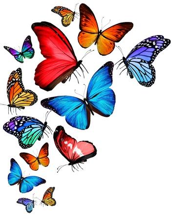 mariposas volando: Muchas diversas mariposas volando, aislado en fondo blanco