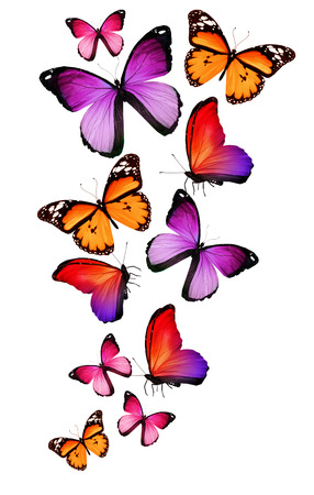 Many different butterflies, isolated on white background photo