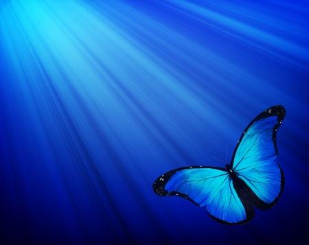 어두운 파란색 배경에 파란색 나비 스톡 콘텐츠