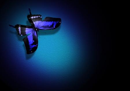 Blue butterfly on dark blue background photo