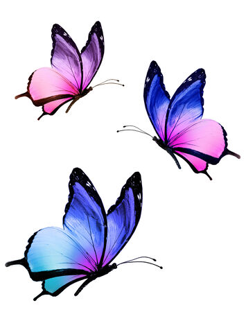 black and blue butterfly flying: Three color butterflies, isolated on white