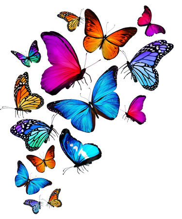 papillon rose: Beaucoup de couleurs diff�rentes papillons volant Banque d'images