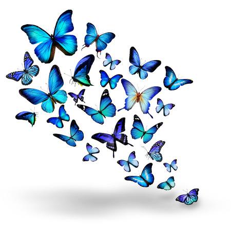 turquesa: Muchas mariposas diferentes azules vuelan