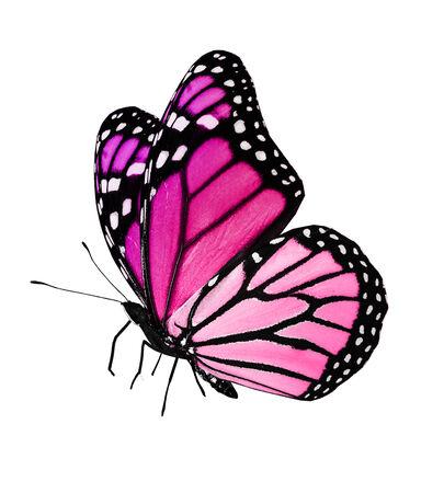 papillon rose: Vol de papillon rose, isolé sur fond blanc Banque d'images