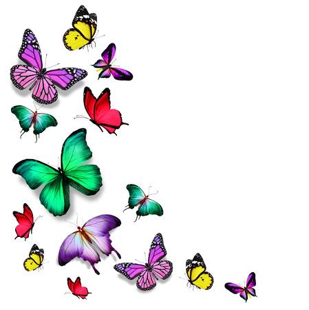 飛んでいる蝶の多くの色します。 写真素材