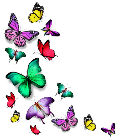 Many color different butterflies flying Standard-Bild