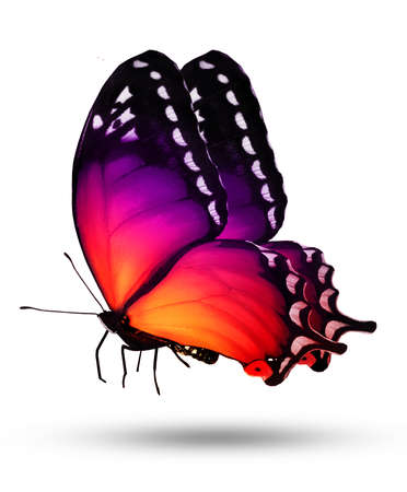 Color butterfly on white background photo